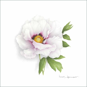 pivoine-blanche-aquarelle-vincent-jeannerot-copie