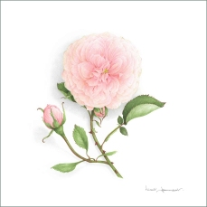 rose-souvenirlamalmaison-aquarelle-vincent-jeannerot-copie